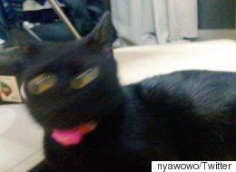 일본에서 '#망한 고양이 사진 대회'가 진행 중이다
