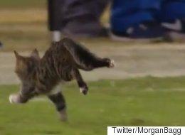 풋볼 경기에 난입한 고양이는 그날의 MVP다