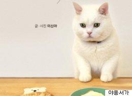 베스트셀러 1위 등극한 제주도 고양이의 정체