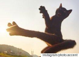 '닌자 고양이'가 등장했다(사진)
