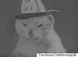 1936년 소방서 고양이 동영상이 인터넷을 불태우고 있다