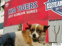 KIA 타이거즈의 우승에 나름 기여한 개가 있다