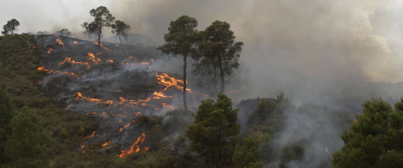 FOREST FIRE ALGERIA