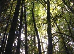 Die Gesundmacher: Neuronale Netze und das geheime Netzwerk der Natur