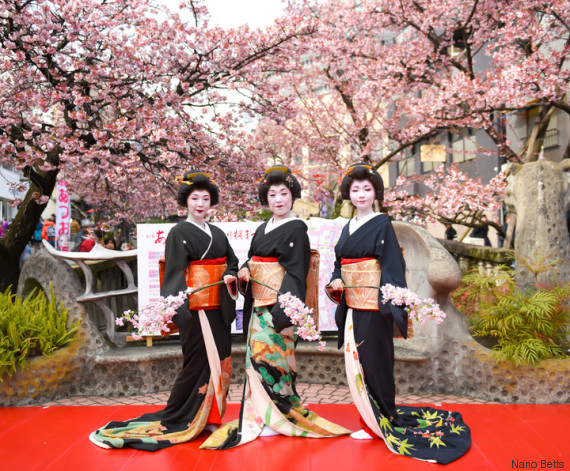sakura festival in atami japan