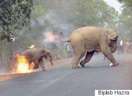 코끼리들에게 불덩어리를 던진 사람들의 사연