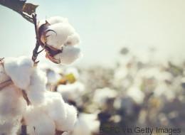 Warum Bio-Baumwolle die bessere Wahl ist: Sustainable Cotton Ranking 2017