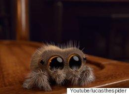 이 영상은 당신의 거미 공포증을 없애줄 것이다