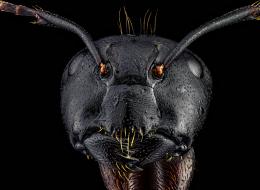 ليس خيالاً علمياً.. نوع من الفطريات يقوم بقرصنة جسد النملة ويحولها إلى زومبي