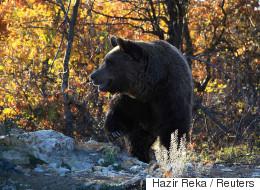 H εκδίκηση της αρκούδας στους κυνηγούς: Αυτοί την τρόμαξαν και αυτή τους...βομβάρδισε