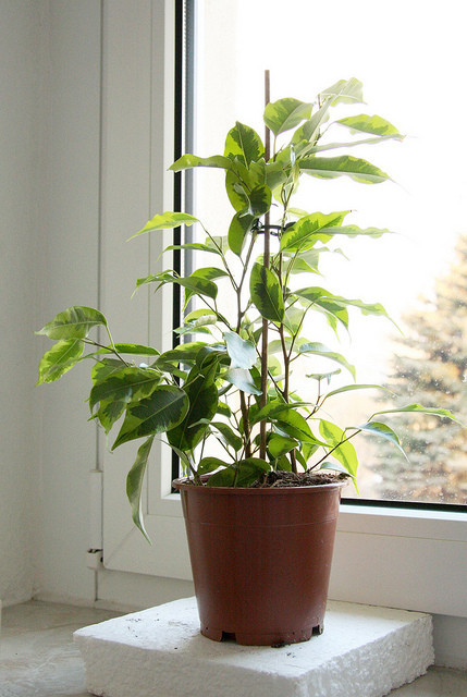 Spring Cleaning Bring Plants Inside