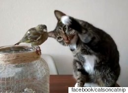 고양이는 새를 너무 쓰다듬고 싶다(영상)