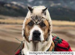 강아지와 고양이가 함께 여행을 떠났다(사진)