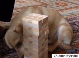 이 개는 '젠가'의 천재다(동영상)