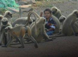 ماوكلي فتى الأدغال أصبح حقيقة.. شاهد كيف ظهر في الهند