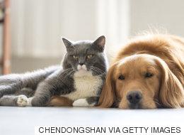 개가 고양이보다 더 똑똑하다는 사실을 과학자들이 밝힌 방법
