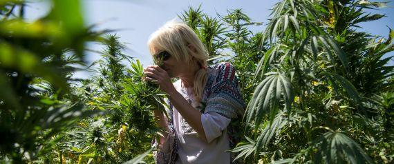 """Résultat de recherche d'images pour """"tourisme cannabis maroc"""""""