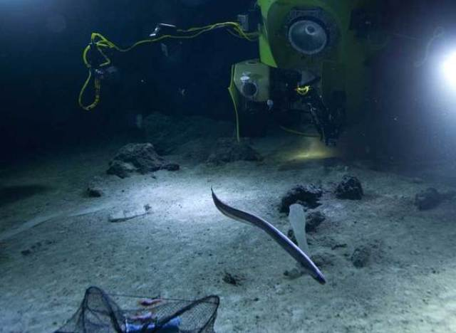 James Cameron Seafloor Photo Unveiled By Director S Team