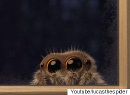 이 거미는 세상에서 가장 귀엽다(동영상)