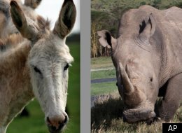 These Two Animals Are Cousins?? Yep!