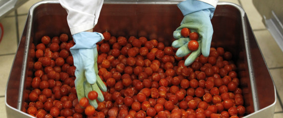TOMATOES EXPORT