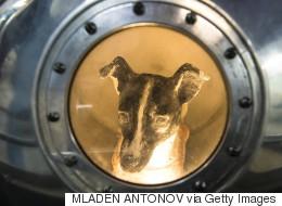 في ذكرى لايكا الـ60.. ماذا حدث لجميع الكلاب والقردة والفئران المُرسلة إلى الفضاء؟