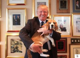 لماذا لا يمتلك ترامب حيواناً أليفاً؟ صحفية أميركية تقدم لرئيسها نصيحةً يبدأ بها 2018 بشكل صحيح دون تغريدات عشوائية أو قلق من كوريا الشمالية