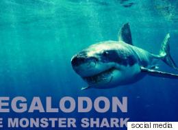 قناة شهيرة أحيت سمكة قرش منقرضة بمساعدة علماء أحياء