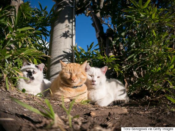 cat japan