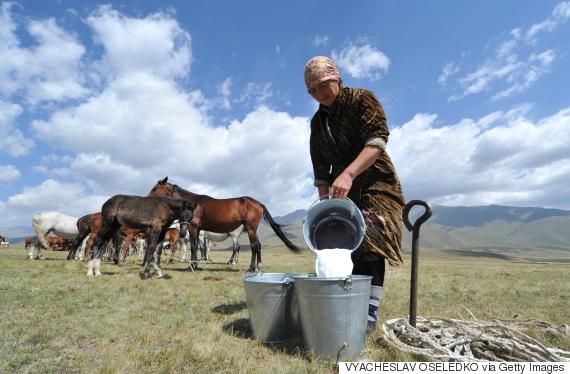 mare milk
