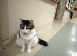 هل تذكرون القط العجيب الذي حيّر العلماء ويتنبأ بموت المرضى ولا يخطئ أبداً؟ الآن