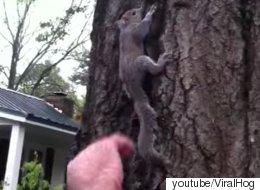 구조한 다람쥐를 돌려보내려다 발생한 비극