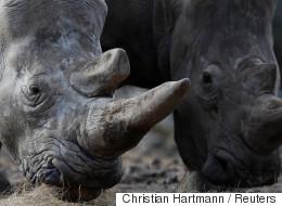 코뿔소를 지키는 DNA 데이터베이스가 있다