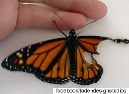 날개가 찢어진 나비에게 날개이식 수술을 했다