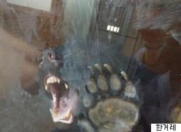 이 맹수들은 3평짜리 유리감옥에 산다(사진)