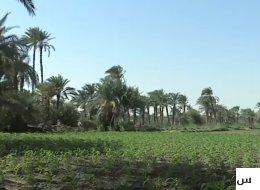 قرية مصرية يزرع سكانها البالغ عددهم 74 ألفاً محصولاً واحداً!.. يصدرونه إلى روسيا وأميركا والدول العربية