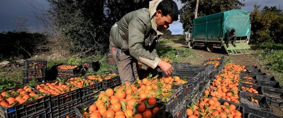 FARMERS ALGERIA