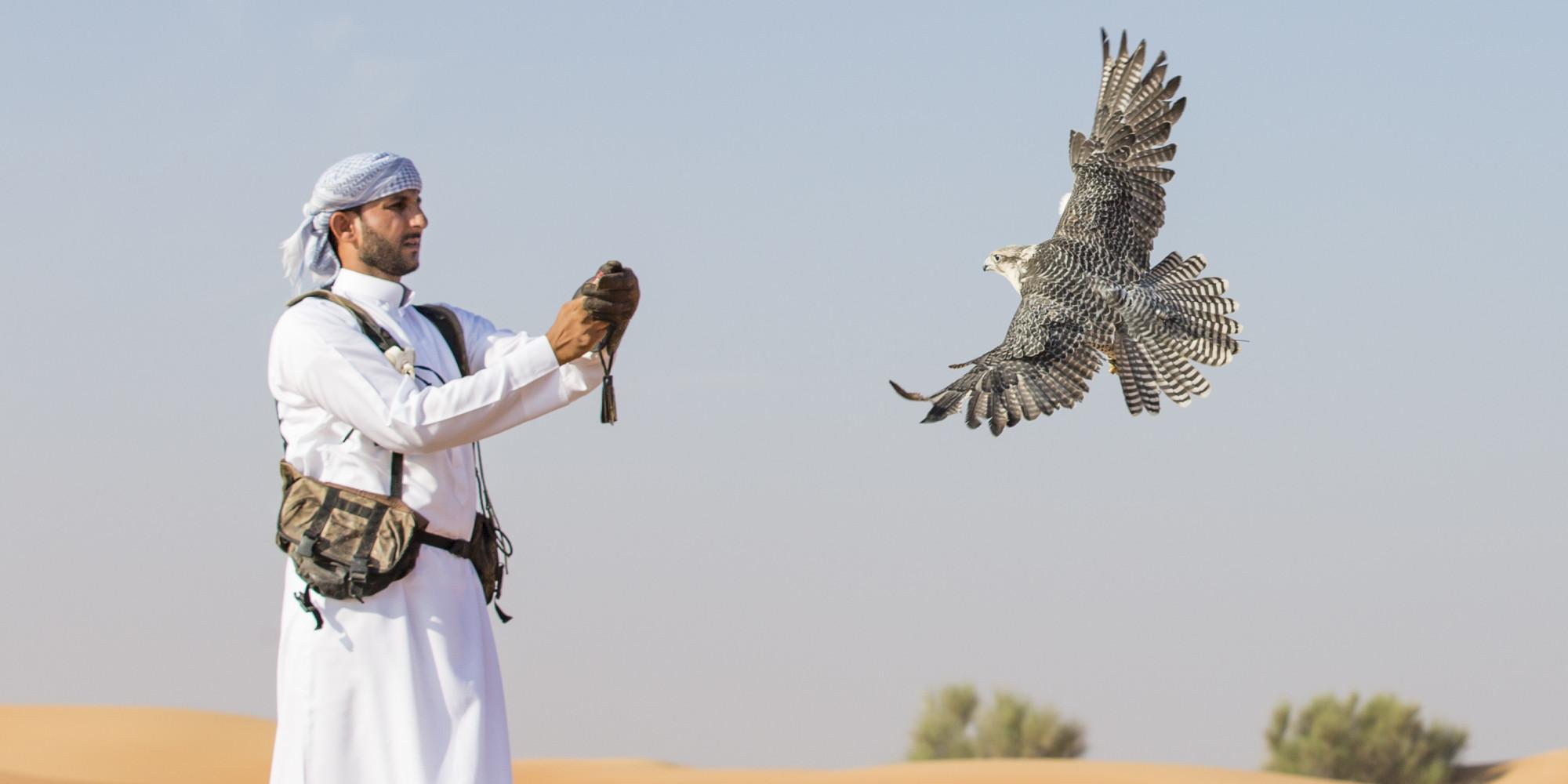 الصقور مهددة بالإنقراض بسبب الإمارات! أبو ظبي تشتري طيوراً بمليار دولار في عام واحد