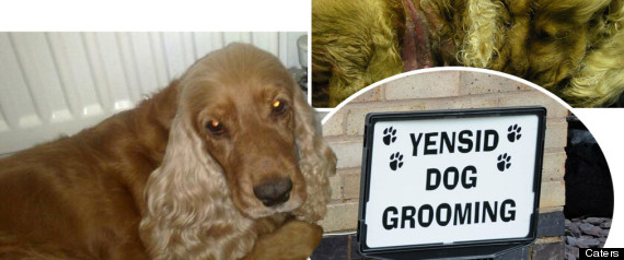 DOG DEATH SPANIEL YENSID DOG GROOMING
