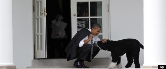 OBAMA DOG MITT ROMNEY