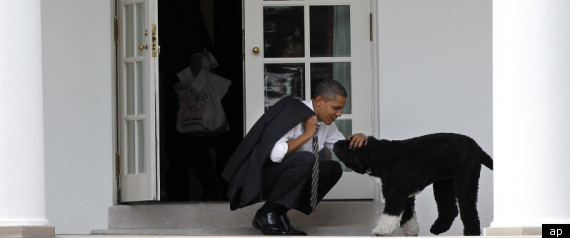 Obama Dog Mitt Romney