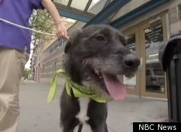 Bronx Woman Reunited Dog