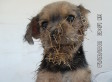 Phoenix Puppy, 'Cactus Jack,' Adopted After Found Face-First On Cactus (VIDEO)