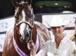 Rita Crundwell: Dixon, Illinois Comptroller Allegedly Spent Embezzled Millions On Horses