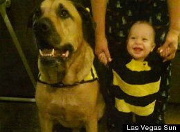 Baby Killed By Dog On His First Birthday (GRAPHIC DESCRIPTION)