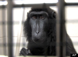 Ohio Officials To Return Exotic Animals To Widow