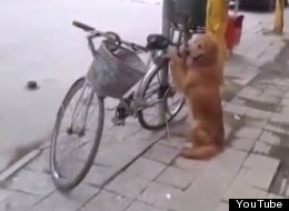 Dog Hugging Bike China Li Li