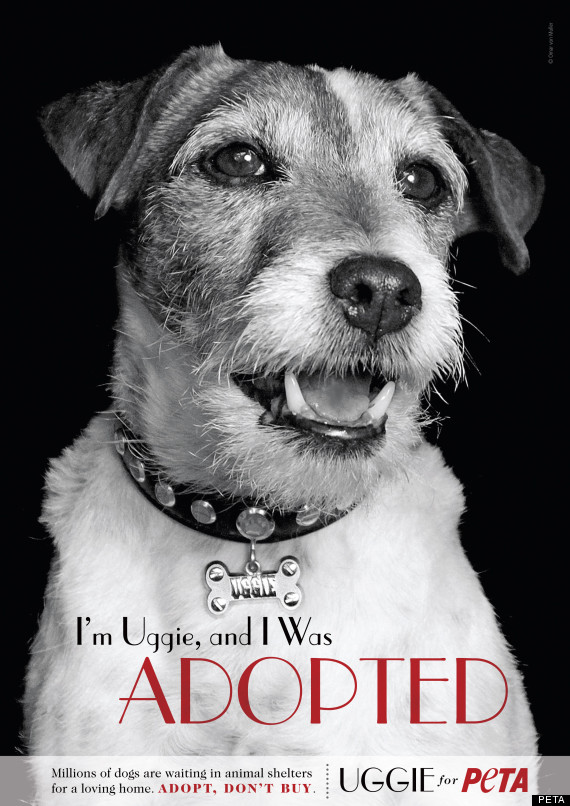 Uggie 'The Artist' Dog PETA Ad: Campaign To Adopt A Pet (PHOTO)