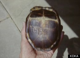 Holland Cokeley Turtle Found 47 Years Son