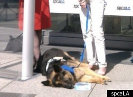 2012 National Hero Dog Award